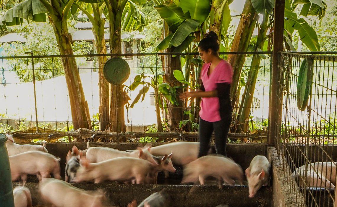 Pig Nursery July 2021-25